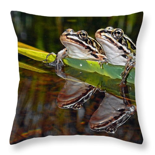 Northern Leopard Frog Throw Pillow featuring the photograph Romance Amongst The Frogs by Asbed Iskedjian