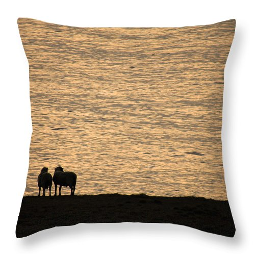 Sheep Throw Pillow featuring the photograph Romancing The Sheep by Donna Blackhall