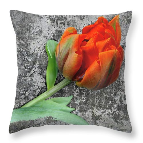 Romantic Throw Pillow featuring the photograph Romantic Tulip by Manfred Lutzius