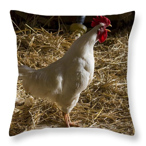 Rooster Crow Crowing Chicken Farm Straw White Red Rural Throw Pillow featuring the photograph Rooster Crowing by Andrei Shliakhau