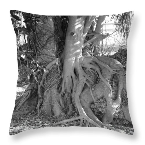 Tree Throw Pillow featuring the photograph Rooted Tree by Rob Hans