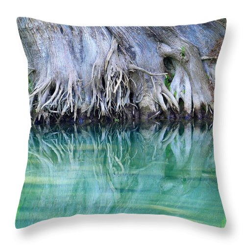 Roots Throw Pillow featuring the photograph Roots by Judi Chesshir