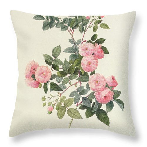 Rosa Throw Pillow featuring the drawing Rosa Multiflora Carnea by Pierre Joseph Redoute