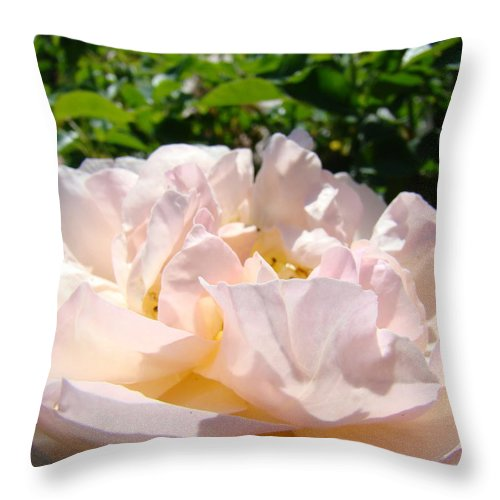 Rose Throw Pillow featuring the photograph Rose Art Prints Canvas Sunlit Pink Rose Garden Baslee Troutman by Baslee Troutman