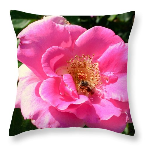 Rose Bee Throw Pillow featuring the photograph Rose Bee by Bennett Thompson