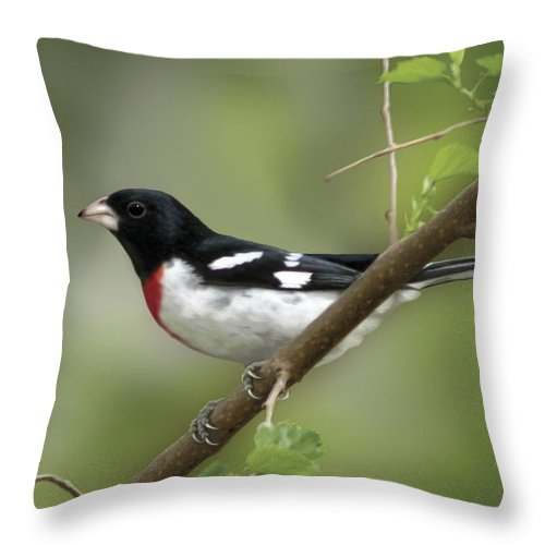 Nature Throw Pillow featuring the digital art Rose Breasted Grosbeak by Barbara Hymer