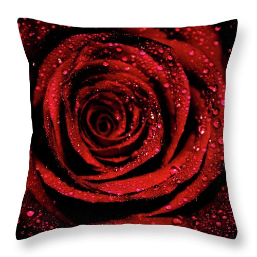 Rose Throw Pillow featuring the photograph Rose Dew by Lee Pirie