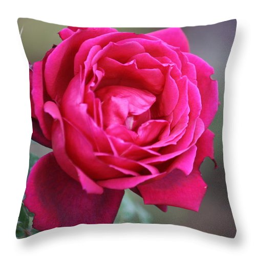 Floral Throw Pillow featuring the photograph Rose by Donna Walsh