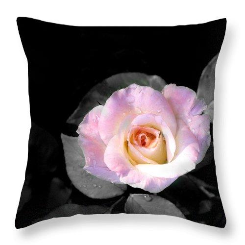 Princess Diana Rose Throw Pillow featuring the photograph Rose Emergance by Steve Karol