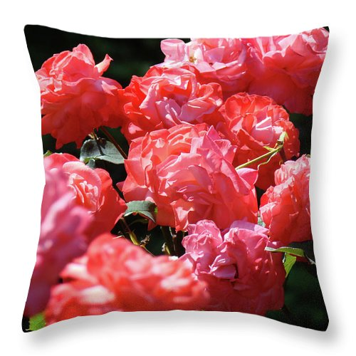 Rose Throw Pillow featuring the photograph Rose Garden Art Prints Pink Red Rose Flowers Baslee Troutman by Baslee Troutman