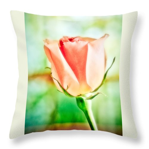 Rose Throw Pillow featuring the photograph Rose In Window by Marilyn Hunt