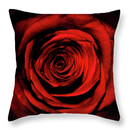 Rose Throw Pillow featuring the photograph Rose by Lee Pirie
