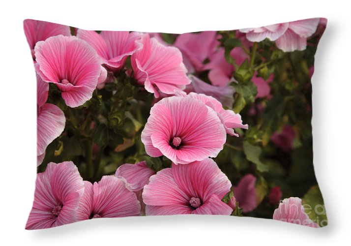 New England Throw Pillow featuring the photograph Rose Mallow Flowers by Erin Paul Donovan