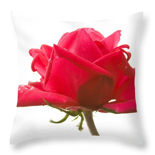 Rose Throw Pillow featuring the photograph Rose on White by Idaho Scenic Images Linda Lantzy