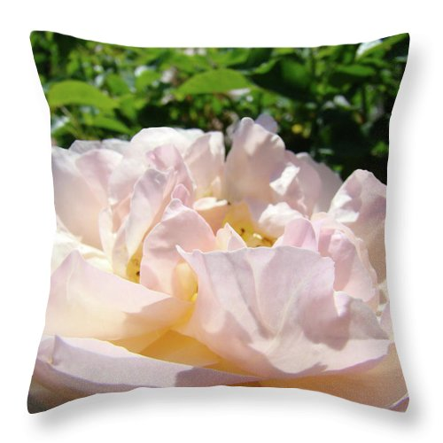 Rose Throw Pillow featuring the photograph Rose Pink Sunlit Rose Flower Art Prints Baslee Troutman by Baslee Troutman