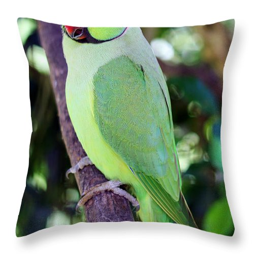 Rose-ringed Parakeet Throw Pillow featuring the photograph Rose-ringed Parakeet by Jennifer Robin