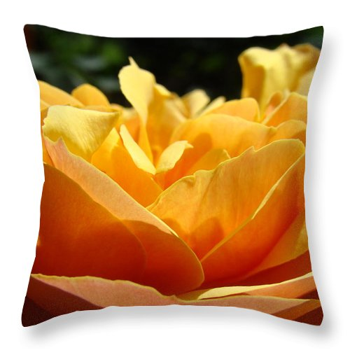 Rose Throw Pillow featuring the photograph Rose Sunlit Orange Rose Garden 7 Rose Giclee Art Prints Baslee Troutman by Baslee Troutman