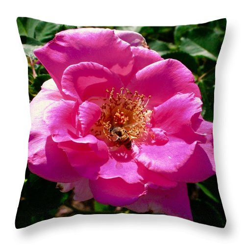 Rose Bee Throw Pillow featuring the photograph Rose To Bee by Bennett Thompson