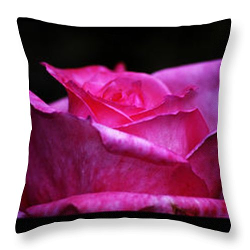 Clay Throw Pillow featuring the photograph Rose Tryptich by Clayton Bruster