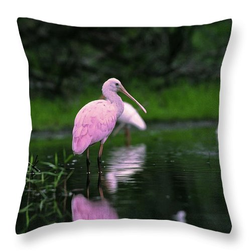 Roseate Spoonbill Standing In Shallow Water Throw Pillow featuring the photograph Roseate Spoonbill by Sally Weigand