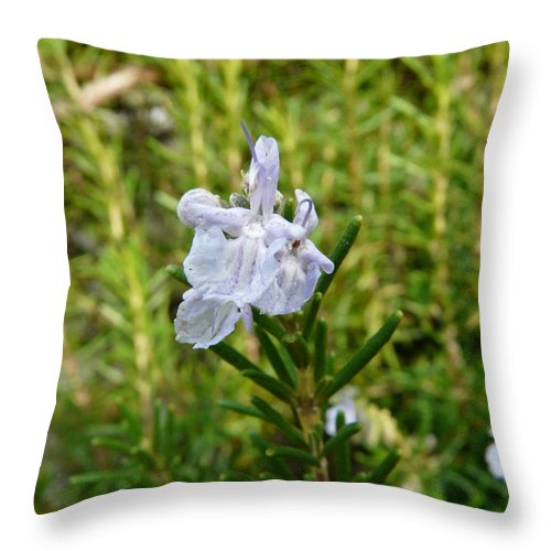 Rosemary Throw Pillow featuring the photograph Rosemary Bloom by Valerie Ornstein