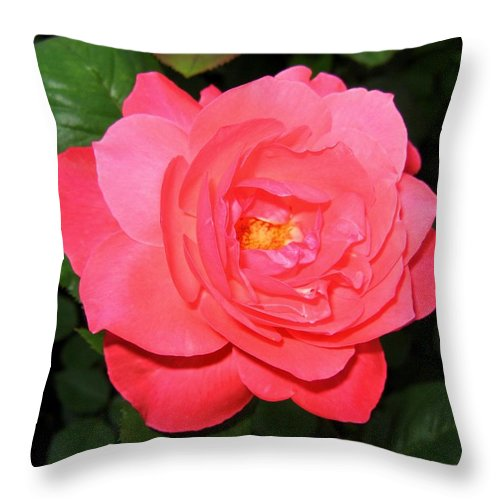 Rose Throw Pillow featuring the photograph Roses 12 by Will Borden