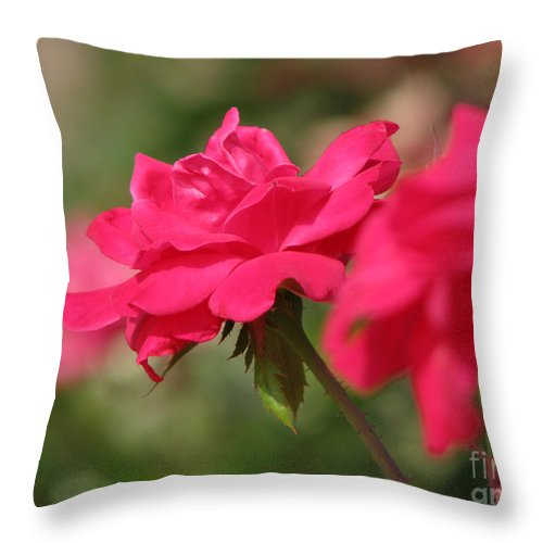 Rose Throw Pillow featuring the photograph Roses by Amanda Barcon