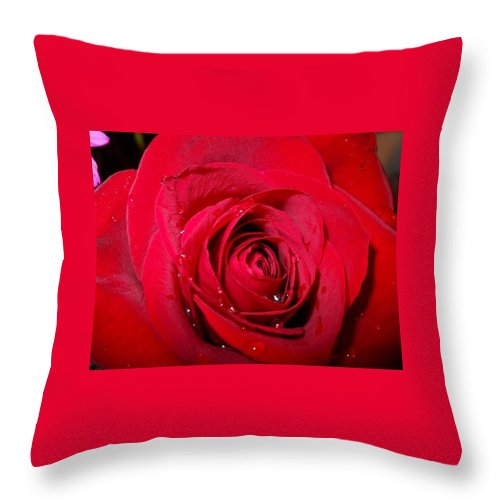 Rose Throw Pillow featuring the photograph Roses Are Red by Heather Isquith
