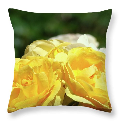 Rose Throw Pillow featuring the photograph Roses Art Prints Canvas Sunlit Yellow Rose Flowers Baslee Troutman by Baslee Troutman