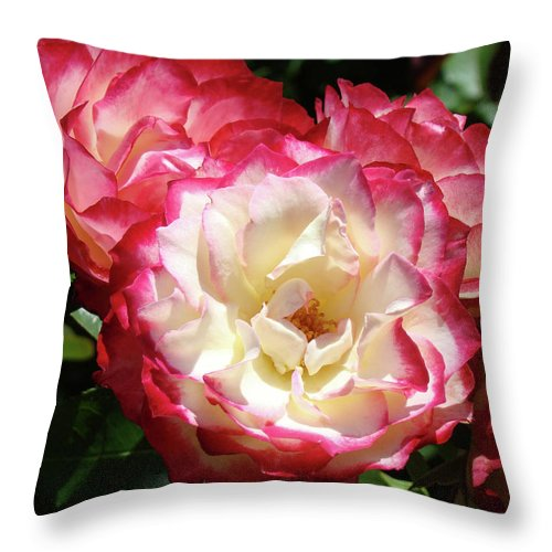 Rose Throw Pillow featuring the photograph Roses Art Prints Pink White Rose Flowers Gifts Baslee Troutman by Baslee Troutman