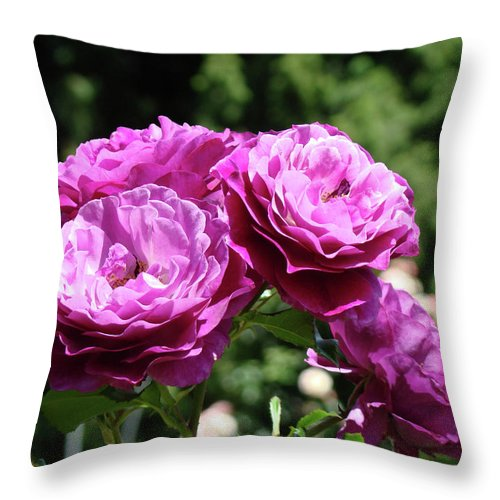 Rose Throw Pillow featuring the photograph Roses Art Rose Garden Pink Purple Floral Prints Baslee Troutman by Baslee Troutman