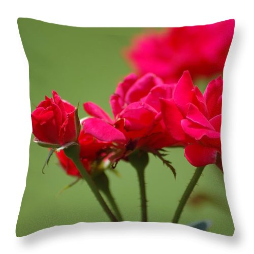 Roses Throw Pillow featuring the photograph Roses by Donna Bentley