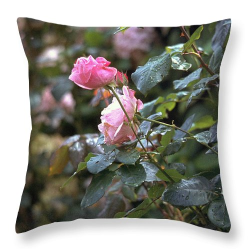 Roses Throw Pillow featuring the photograph Roses by Flavia Westerwelle
