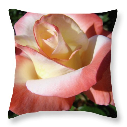 Rose Throw Pillow featuring the photograph Roses Pink Creamy White Rose Garden 5 Fine Art Prints Baslee Troutman by Baslee Troutman