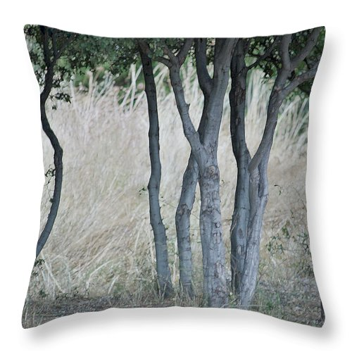 Nature Throw Pillow featuring the painting Row Of Trees by Glennis Siverson