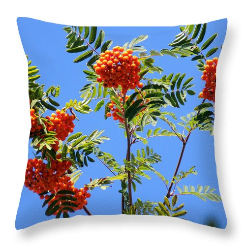 Rowan Berries Throw Pillow featuring the photograph Rowans And The Sky by William Tasker