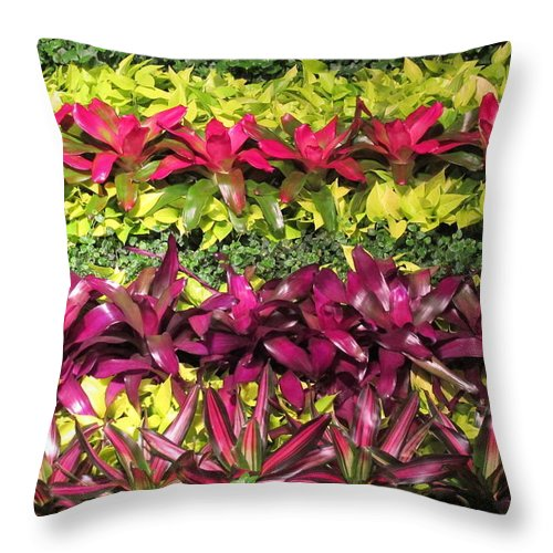 Bromeliads Throw Pillow featuring the photograph Rows Of Bromeliads by Cindy Kellogg