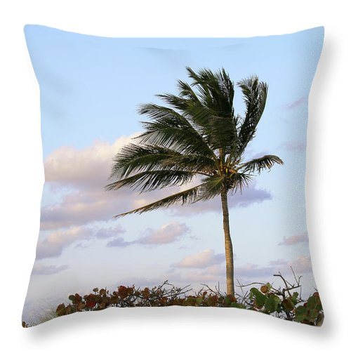 Royal Palm Tree Throw Pillow featuring the photograph Royal Palm Tree by Art Block Collections