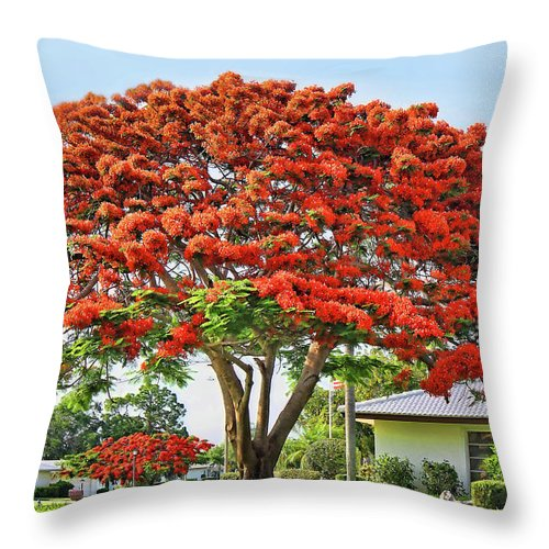 Royal Poinciana Tree Throw Pillow For Sale By Hh Photography Of Florida