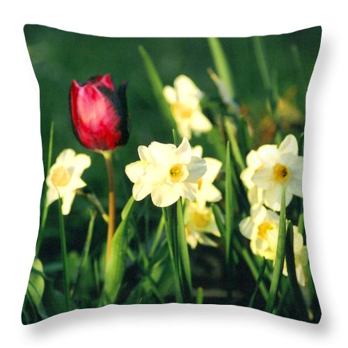 Tulips Throw Pillow featuring the photograph Royal Spring by Steve Karol