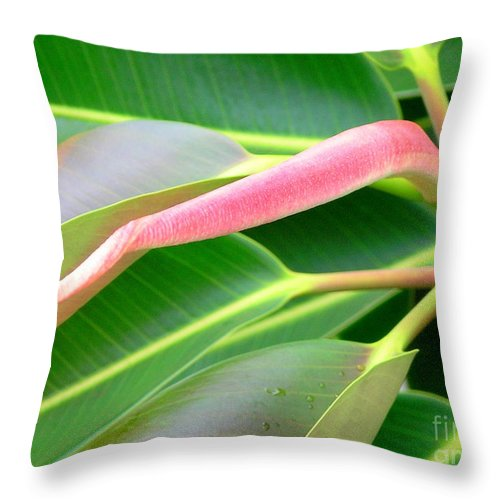 Rubber Tree Throw Pillow featuring the photograph Rubber Tree - New Leaf by Mary Deal