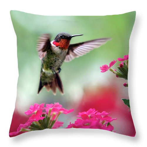 Hummingbird Throw Pillow featuring the photograph Ruby Garden Jewel by Christina Rollo