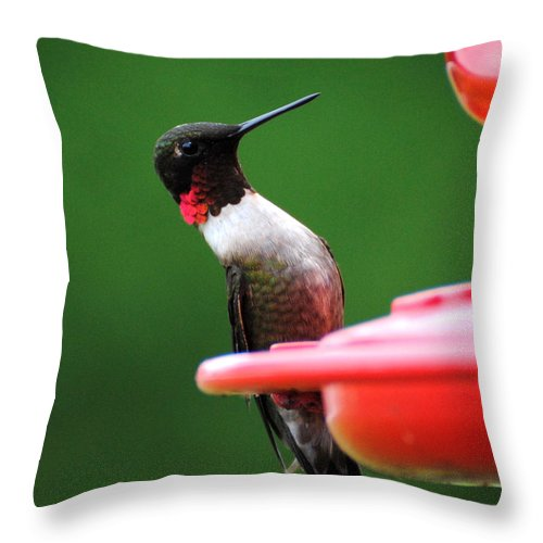 Avian Throw Pillow featuring the photograph Ruby Red Throated Hummingbird On Feeder by Jai Johnson
