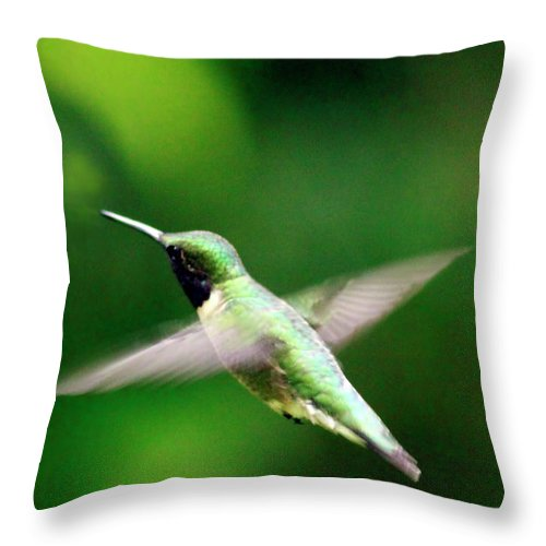 Canvas Throw Pillow featuring the photograph Ruby-throated by Phill Doherty