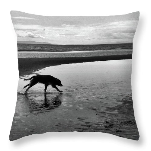 Abstract Throw Pillow featuring the photograph Running Dog Bw by Lyle Crump