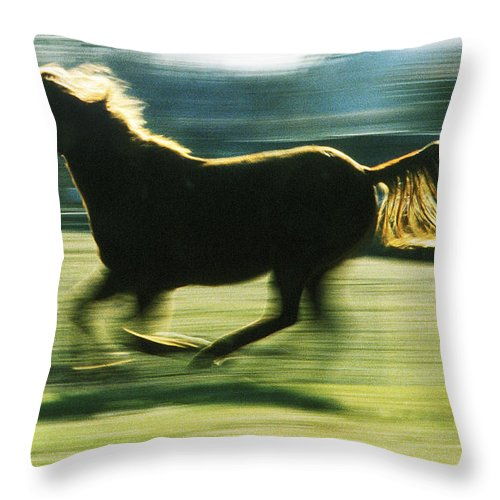 Horse Throw Pillow featuring the photograph Running Horse Backlit by Steve Somerville