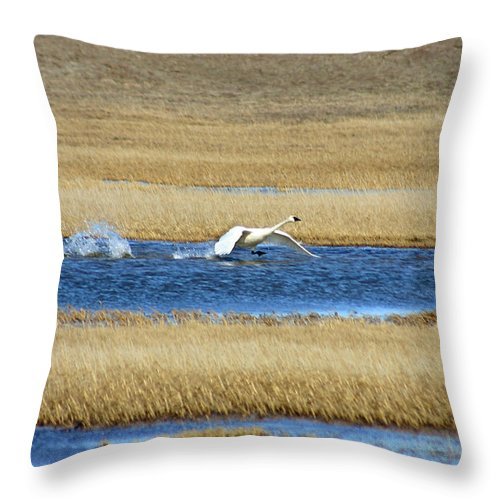 Swan Throw Pillow featuring the photograph Running On Water by Anthony Jones