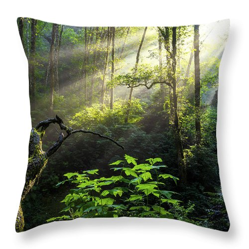 Light Throw Pillow featuring the photograph Sacred Light by Chad Dutson