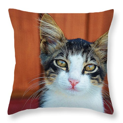 Cat Art Throw Pillow featuring the painting Sad Cat by Queso Espinosa