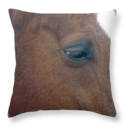 Horse Throw Pillow featuring the photograph Sad Eyed by Shelley Jones
